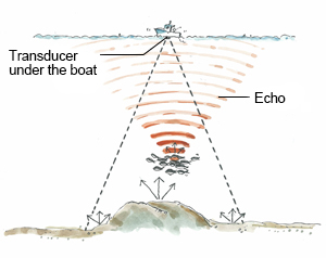Furuno all about fish finders topic 10 weak return echo for How to read fish finder